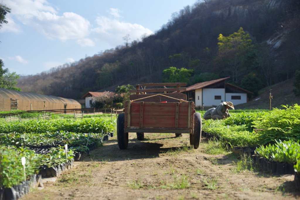 Ecosia Arama Motoru Ağaçlandırma Çalışmaları